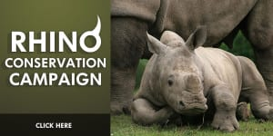 save-the rhino